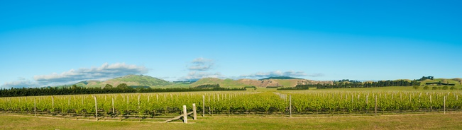 Panoramic photo of winery from South Island of New Zealand